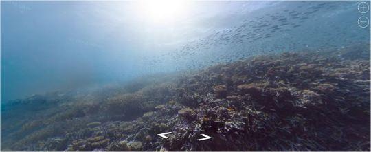 Grande barriere Corallina australiana da Google Street view -3
